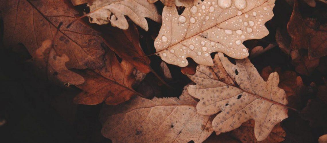 wet-leaves